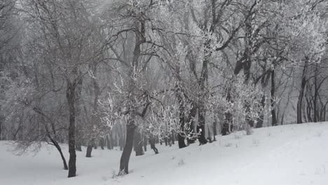 Winter-forest-1