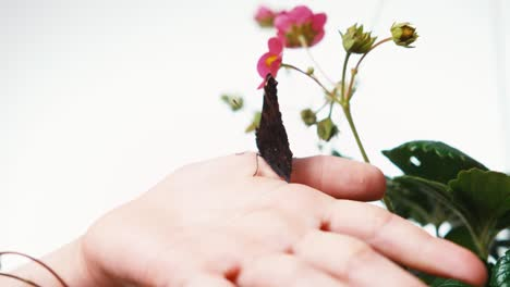 Black-Butterfly-Sitting-On-The-Finger-Of-Child