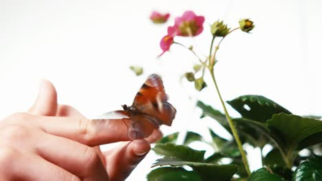 Butterfly-Sitting-On-The-Finger-Of-Child