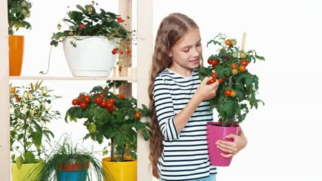 Cheerful-Blonde-Girl-Picking-Up-Cherry-Tomatoes-On-White-Background