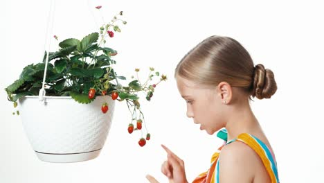 Cheerful-Girl-Child-Counting-Strawberry-In-White-Pot-On-White-Background