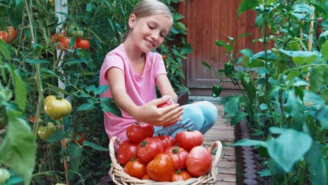 Cheerful-Girl-Is-Harvesting-Tomatoes-Girl-Sitting-Near-Basket-Of-Tomatoes