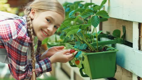 Child-And-Strawberry-In-The-Kitchen-Garden