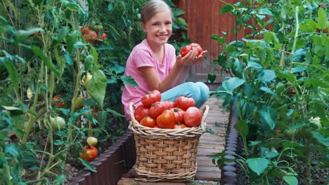 Child-Girl-Holding-In-Hands-Big-Ripe-Red-Tomato-Sitting-Near-Basket-Of-Tomato