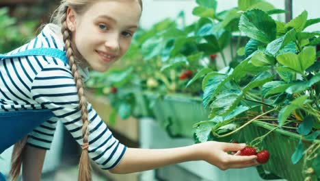 Child-Girl-In-The-Kitchen-Garden-Sniffing-Strawberry-And-Give-At-Camera
