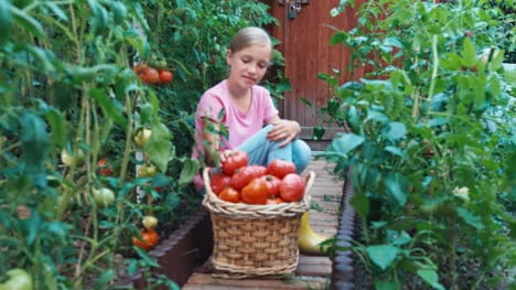 Child-Girl-Sitting-Near-Basket-Of-Tomatoes-And-Smiling-At-Camera