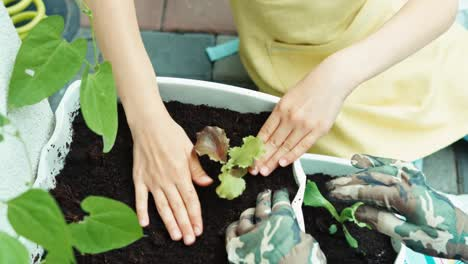 Child-Is-Planting-Of-Salad-Seedling-To-Soil-Top-View