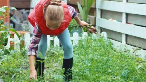 Kind-Das-In-Seinem-Gemüsegarten-Kleine-Karotten-Aufsammelt