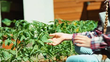 Child-Touching-Leaf-Of-Tomato-In-Kitchen-Garden