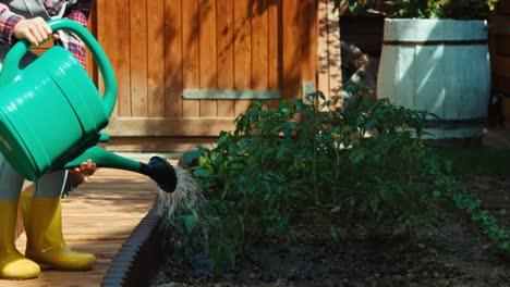 Kind-Gießt-Tomatensämlinge-Im-Garten-und-Schaut-In-Die-Kamera