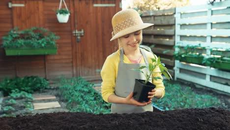 Kind-Das-Mit-Pfefferkeimling-Im-Gemüsegarten-Arbeitet