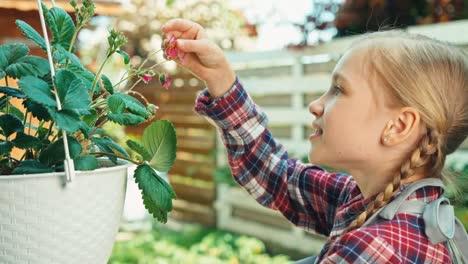 Nahaufnahme-Porträt-Kind-Mädchen-Erdbeere-Betrachten