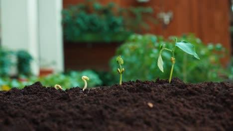 Close-Up-Shot-Rain-Falling-To-Seedlings
