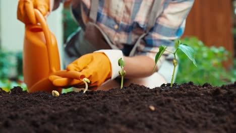 Close-Up-Shot-Woman-Watering-Seedling-Of-Vegetables-In-Her-Garden