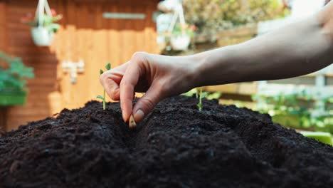 Nahaufnahme-Erschossene-Hand-Des-Landwirts-Der-Bohnensamen-Pflanzt-Um-Dolly-Schuss-Zu-Erden-