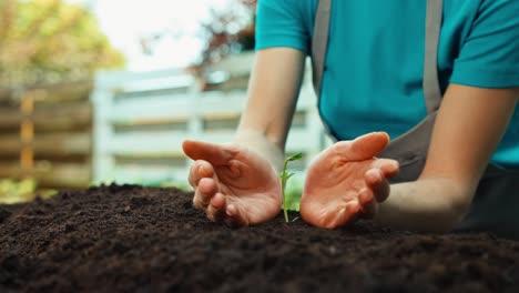 Nahaufnahme-Erschossene-Hände-Einer-Bäuerin-Die-Sich-Um-Eine-Kleine-Pflanze-Kümmert-