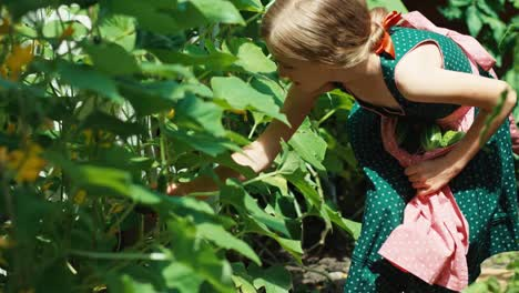 Cute-Blonde-Girl-8-Aged-In-Green-Dress-With-Apron-Searching-Vegetables-In-Garden
