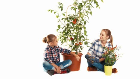 Daughter-And-Mother-Looking-At-Big-Tomato-Plant-On-White-Background-And-Smiling