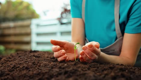 Farmer-Caring-About-Bean-Seeds-To-Garden-Bed-Dolly-Closeup-Hands