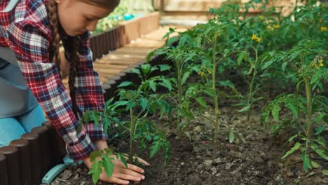 Farmer-Child-Planting-Vegetables-Plants-To-Soil