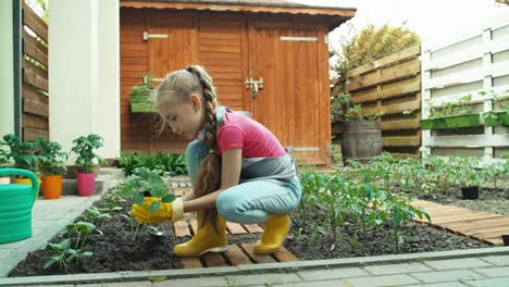 Farmer-Girl-Child-Planting-Young-Seedlings-Cucumber-Dolly-Shot