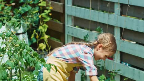 Farmer-Girl-Watering-Vegetables-In-Her-Kitchen-Garden-At-Sunny-Day