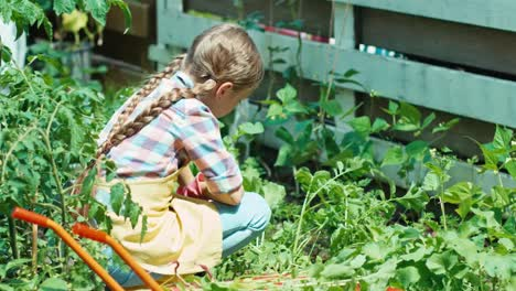 Farmer-Girl-Working-In-The-Garden-At-Sunny-Day