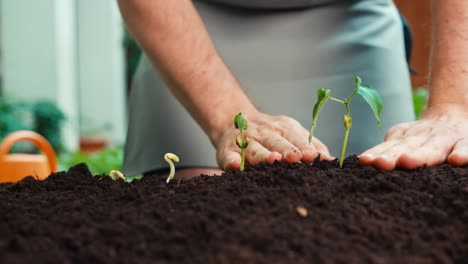 Farmer-Hands-Caring-About-Seedlings-In-Soil-Closeup