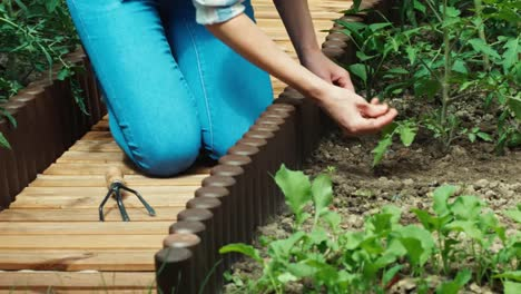 Mujer-Campesina-Cuidando-De-Tomates-En-El-Jardín
