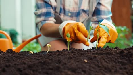 Farmer-Woman-Hands-Caring-About-Seedlings-In-Soil-Closeup