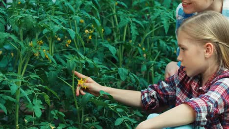 Familia-De-Agricultores-Cuidando-De-Tomates-En-El-Jardín-Y-Sonriendo-A-La-Cámara