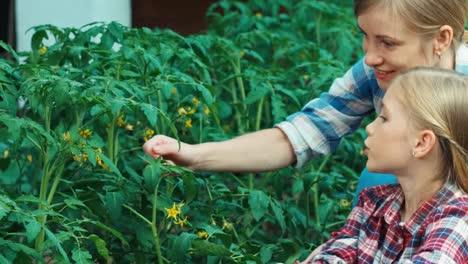 Familia-De-Agricultores-Hablando-Sobre-Tomates-En-El-Jardín