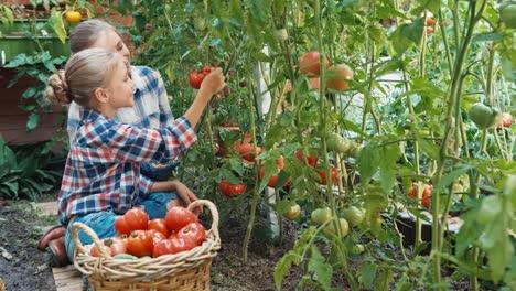 Farmers-In-Kitchen-Garden