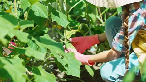 Girl-8-Age-Picking-Up-Cucumbers-In-The-Kitchen-Garden-Child-Holding-Vegetable