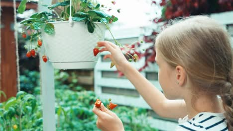 Girl-9-Aged-Picking-Up-Strawberry-In-The-Garden