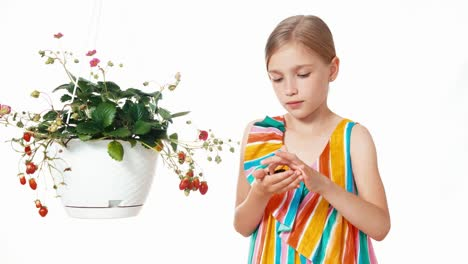 Girl-Holds-In-Hands-Black-Butterfly-On-White-Background