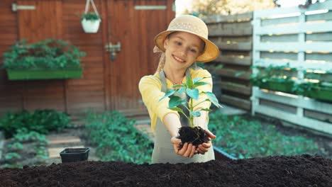 Girl-Holds-In-Her-Hand-Seedling-Of-Cucumber