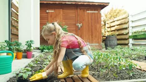 Mädchen-In-Handschuhen-Pflanzt-Setzlinge-Gurke-Zum-Boden-Dolly-Shot