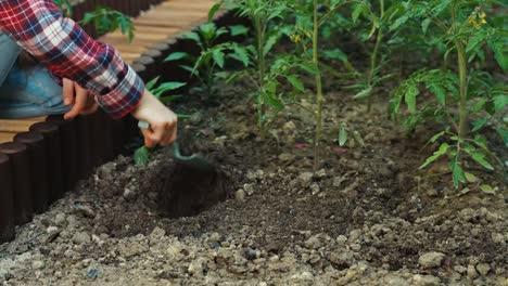 Chica-Plantar-Tomates-Al-Suelo-En-El-Huerto