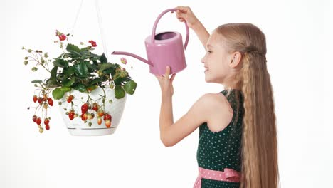 Girl-Watering-Strawberry-In-Pot-On-White-Background