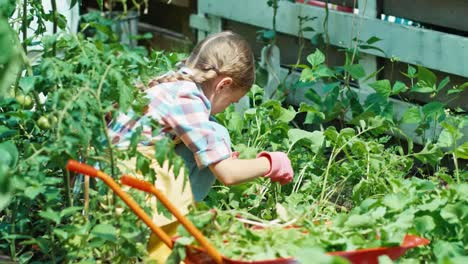 Girl-Working-In-The-Kitchen-Garden-At-Sunny-Day