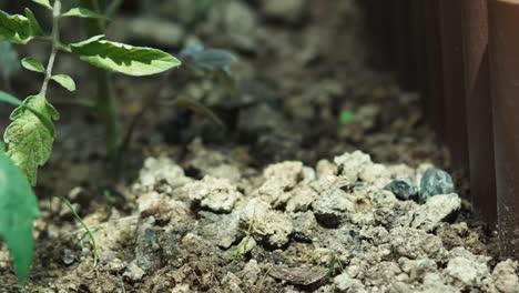 Hand-Loosening-Soil
