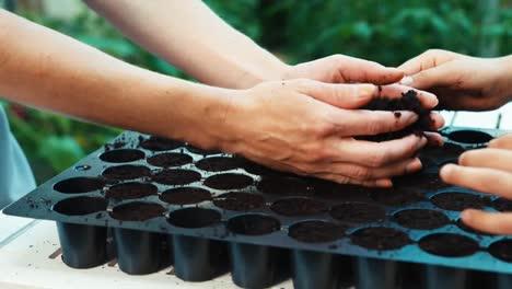 Hand-Of-Child-Preparing-Soil-For-Seeds-Of-Vegetables