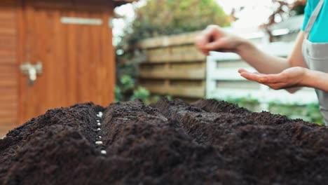 Plantar-Semillas-De-Frijol-A-Mano-En-El-Suelo-En-El-Jardín-De-Tiro