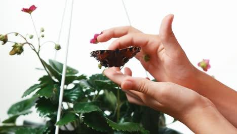 Manos-Del-Niño-Tiene-Mariposa-Negra