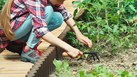 Little-Farmer-Caring-About-Of-Tomatoes-In-The-Garden