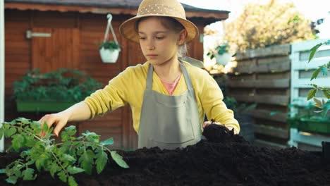 Pequeño-Agricultor-Niña-Plantar-Plántulas-De-Tomate-En-El-Suelo-Dolly-Shot