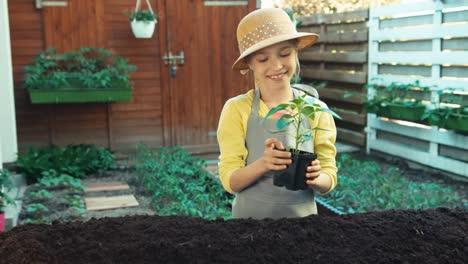 Pequeño-Agricultor-Planea-Plantar-Plántulas-De-Pimiento-En-El-Suelo-En-El-Jardín