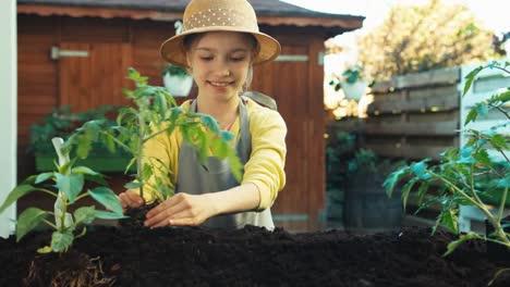 Kleines-Bauernmädchen-Das-Tomatensämling-In-Den-Boden-Pflanzt-Und-In-Die-Kamera-Lächelt