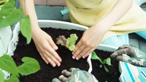 Little-Farmer-Girl-Planting-Seedlings-Of-Salad-To-The-Soil
